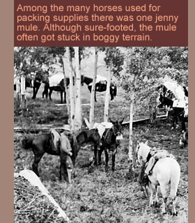 Horses and jenny mule on the Bedaux Expedition